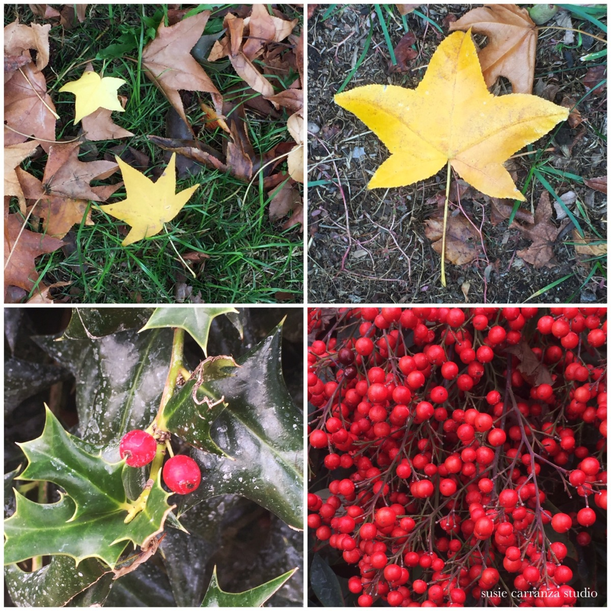 Photos from my sister's garden...