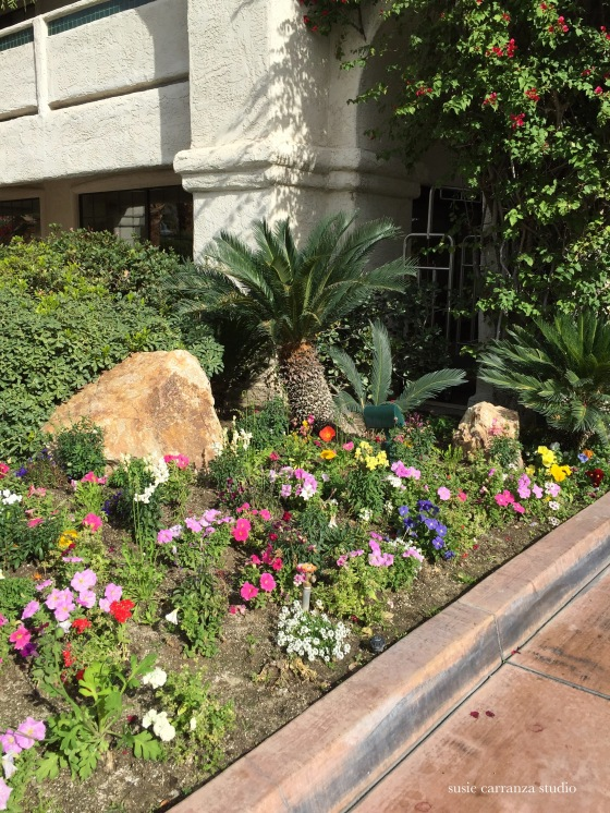 Flower bed outside our Palm Springs hotel - susie carranza studio